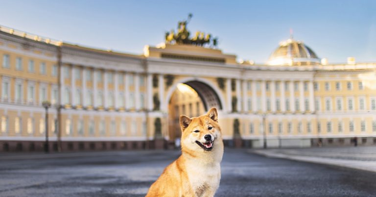 What Does Dogecoin Have to Do With Government Crypto Bans?