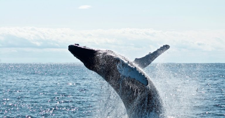 If Whales Move the Market, UniWhales Is the Whale Whisperer