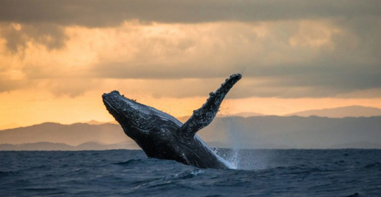 No, A Whale Didn' t Cause Bitcoin To Crash Overnight