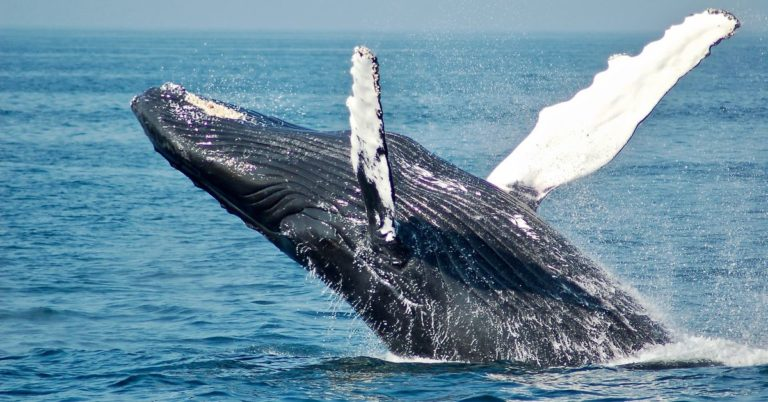 'Coinbase Premium' Indicates Whales on Binance May Be Behind Bitcoin's Rally — CoinDesk